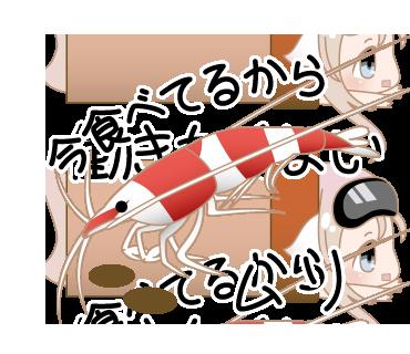 シュリンプのスタンプもある、熱帯魚なめんなLINEスタンプをよろしくなんだ!