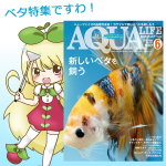 月刊アクアライフ6月号レビュー!初夏に思う「改良ベタとはなんだ」