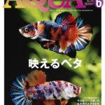 熱帯魚の幅の広さを味わう!アクアライフ2019年6月号レビュー!